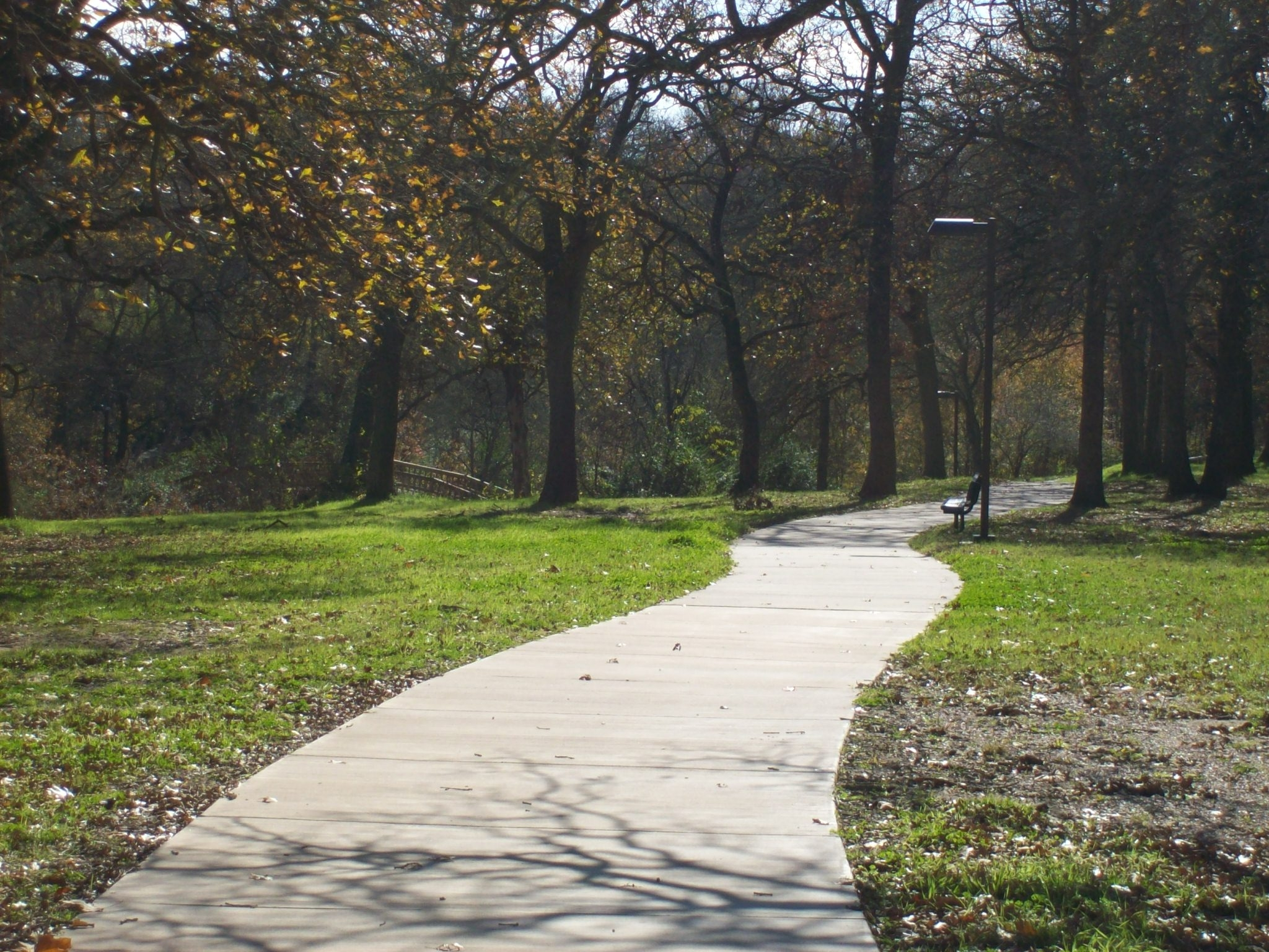 Paved trail in the woods